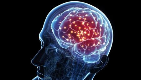 Εντόπισαν νέα περιοχή στον εγκέφαλο που επηρεάζει την όρεξη και το σωματικό βάρος