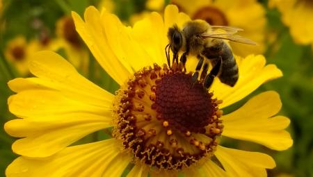 Οι μέλισσες μπορούν να εθιστούν στα φυτοφάρμακα!