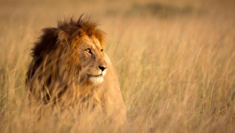 Λιοντάρια κατασπάραξαν δύο λαθροθήρες