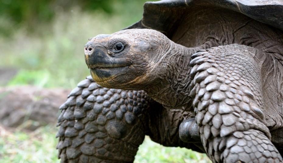 Κλάπηκαν 123 μωρά γιγαντιαίων χελωνών από τα Νησιά Γκαλαπάγκος