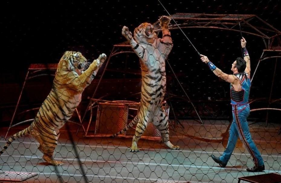 Τίγρεις σε τσίρκο στην Ιταλία κατασπάραξαν τον θηριοδαμαστή τους