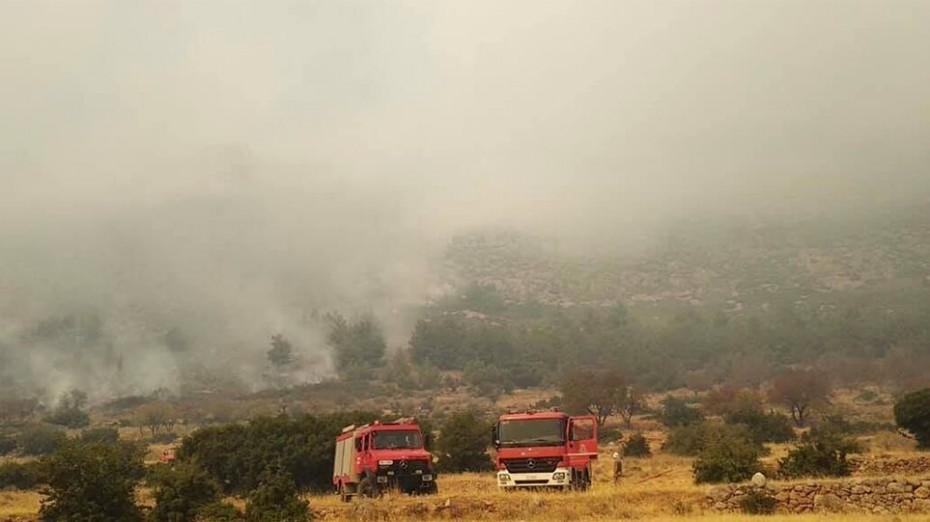 Περιορίστηκε η πυρκαγιά στην Καμηλόβρυση Λαμίας