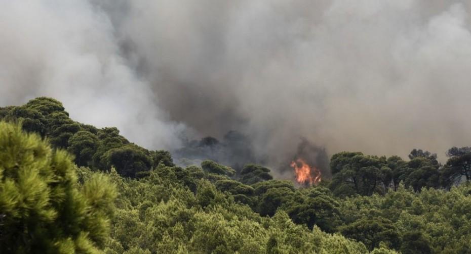 Μεγάλη δασική πυρκαγιά στο Φλόκα Αχαΐας