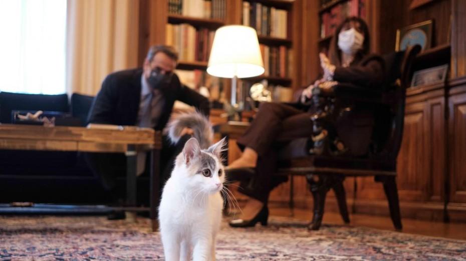 Η συνάντηση Μητσοτάκη με την... προεδρική γάτα