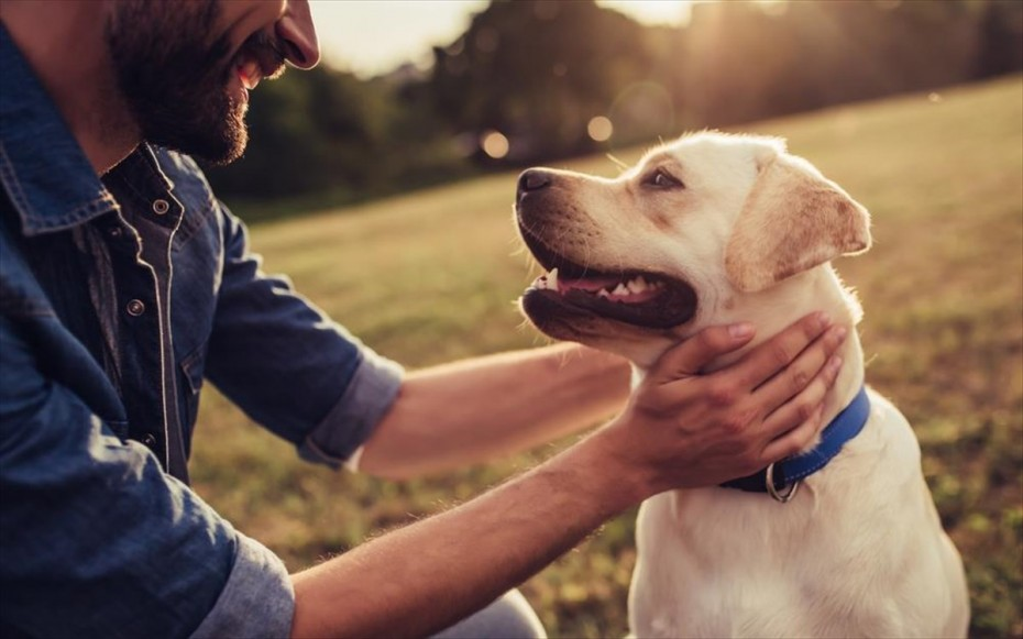 Τι προβλέπει το ν/σ για τα ζώα συντροφιάς και τα αδέσποτα