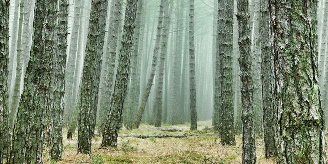 Επιτροπή ΦΥΣΗ 2000: Οι βασικές αρχές για την αποκατάσταση των καμένων οικοσυστημάτων