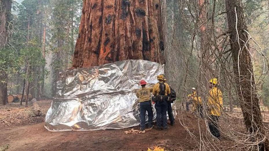 Φωτιές στην Καλιφόρνια: Πυροσβέστες «τυλίγουν» σε φύλλα αλουμινίου γιγαντιαίες σεκόγιες για να τις σώσουν