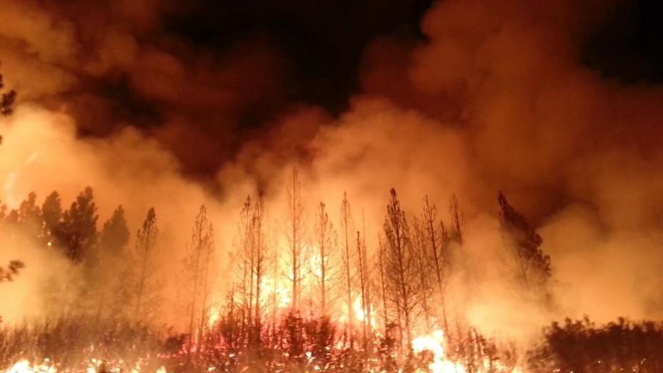 Πάνω από 33.000 θάνατοι παγκοσμίως κάθε χρόνο λόγω ρύπανσης του αέρα από τις δασικές πυρκαγιές