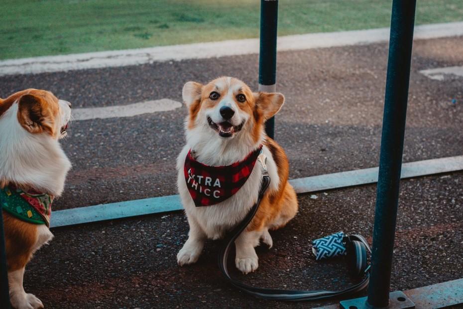 Νομοτεχνικές βελτιώσεις στο νομοσχέδιο για τα ζώα συντροφιάς